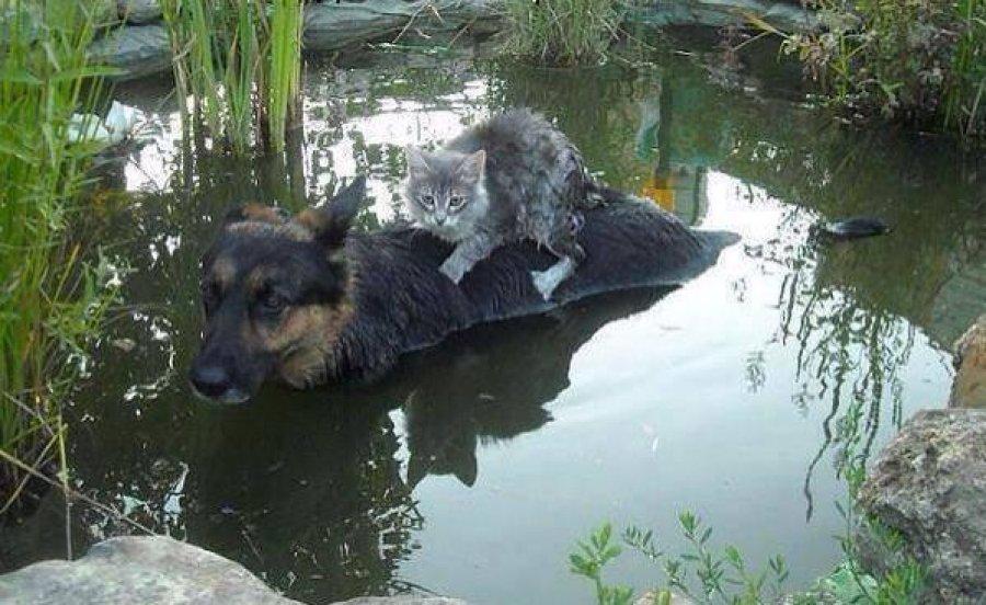 Ova slika je iz Februara, 2014. Nije slikana u poplavama u Srbiji.